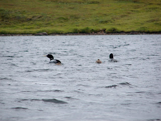 The whole Loon family!