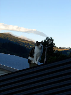 A cat on Baldwin Street, posed on a fence post. Note the angle of the fence!!