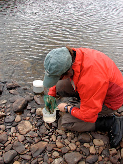 Elissa putting our YOY in fresh water for their trip back to the lab