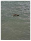 ducks.png