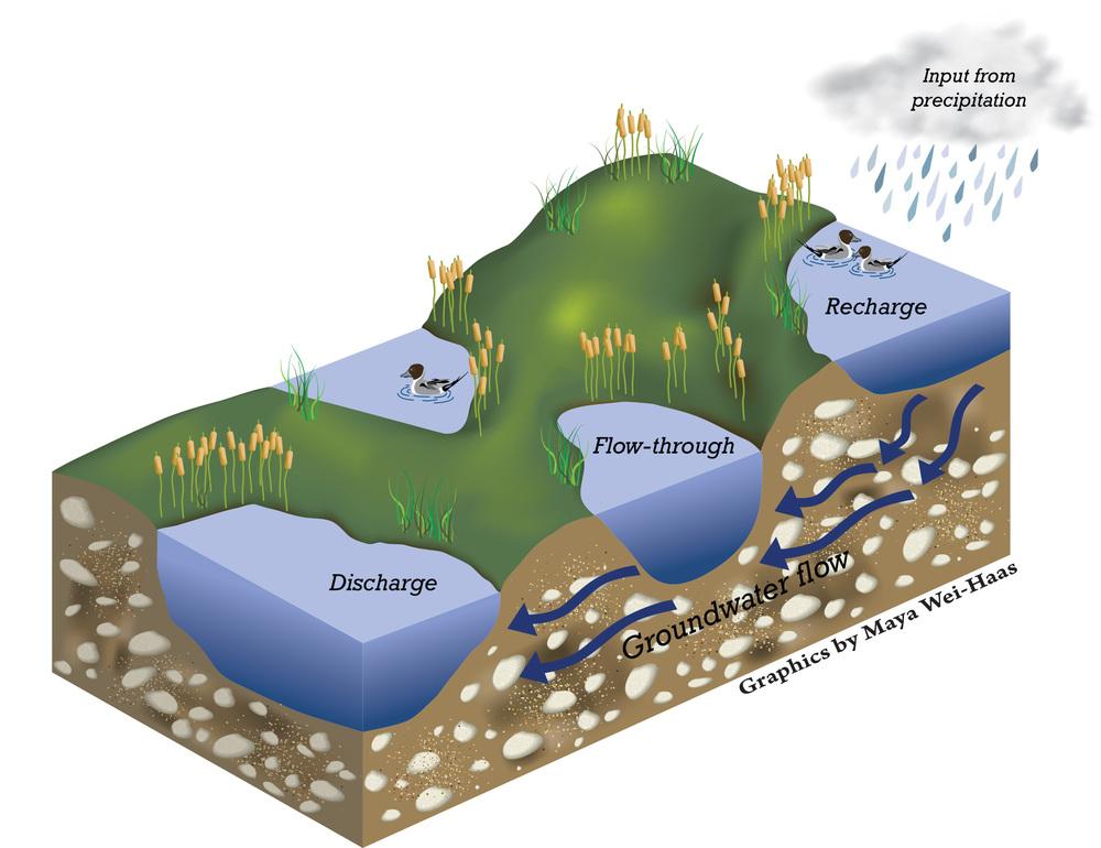 Water Flow Path in the Prairie Pothole Region. Image created in Adobe Illustrator CS6
