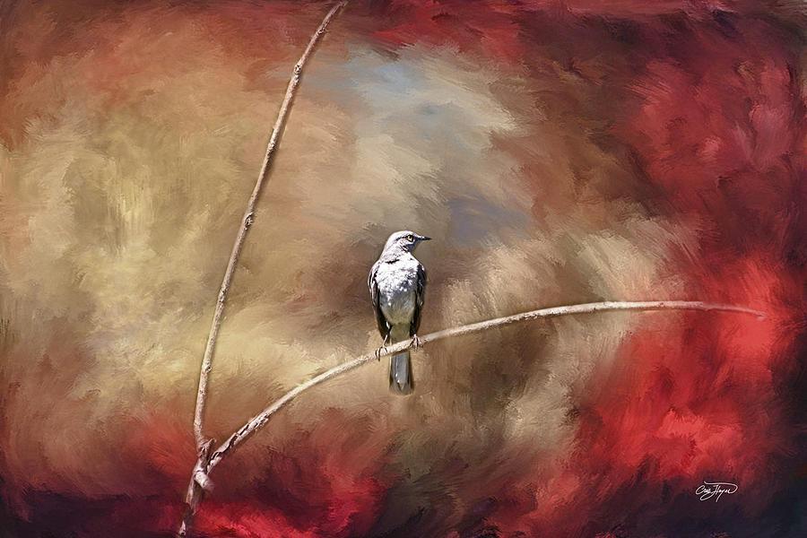 Mockingbird, (c) Cris Hayes