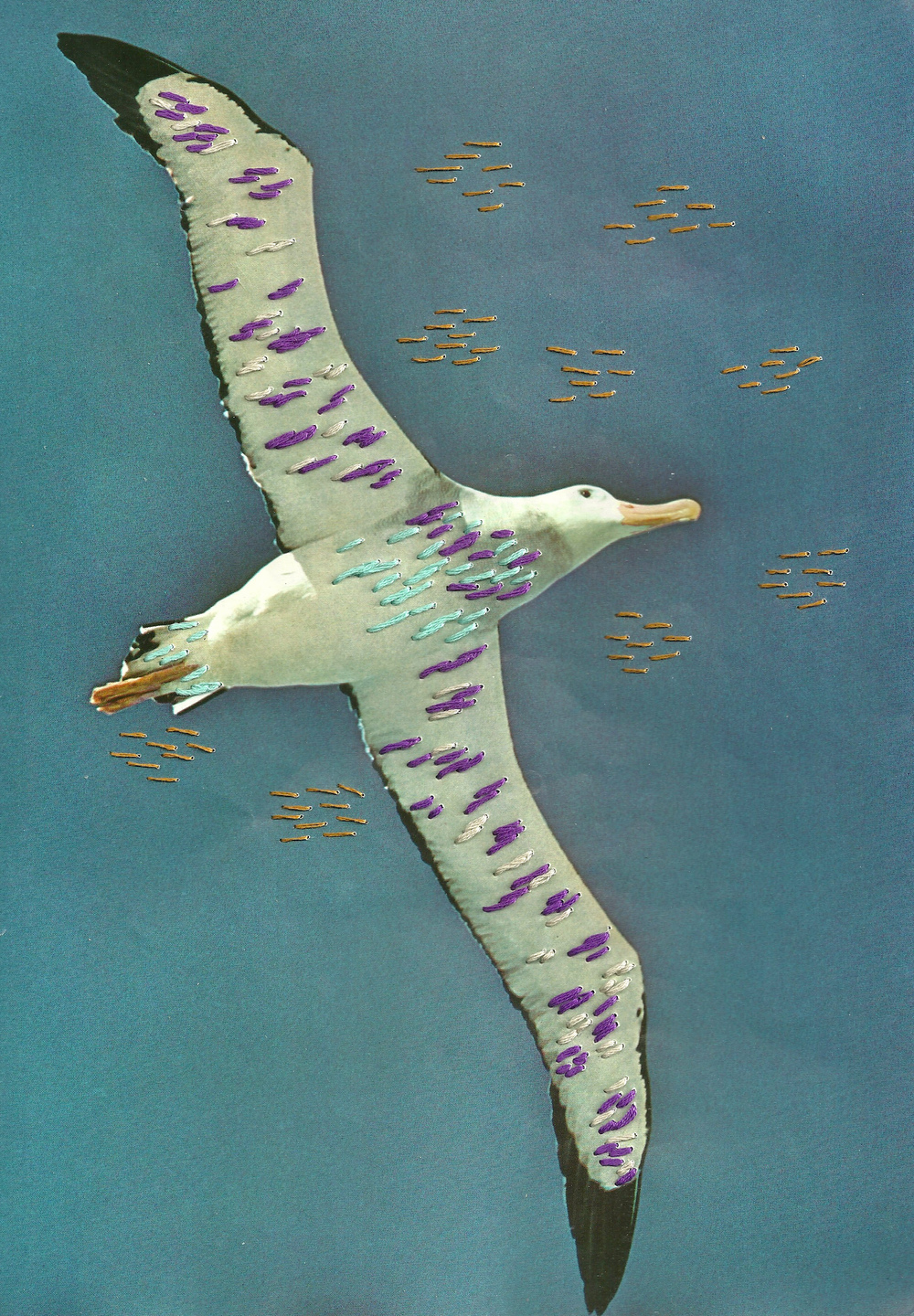 Albatross    Embroidery on Paper  2013