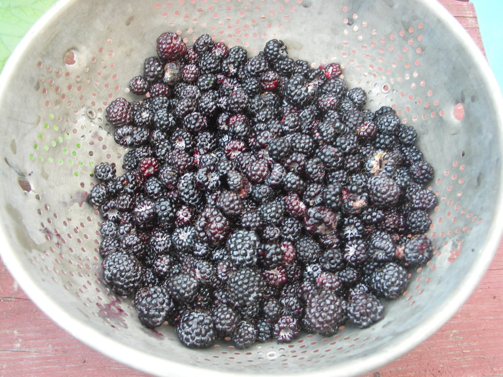 Black raspberries . . . Ross' favorite!