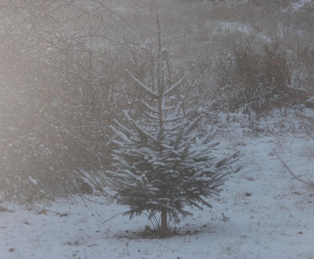 Dec 2013 087 (2).jpg