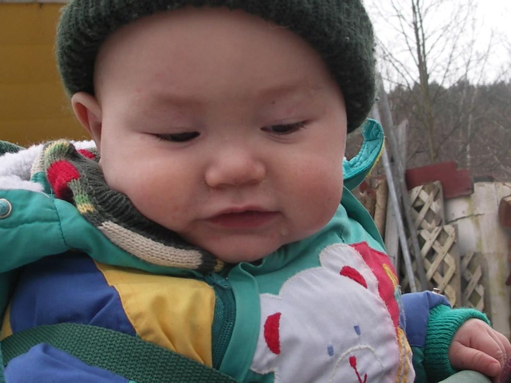 Celeus baby yrs 732.jpg