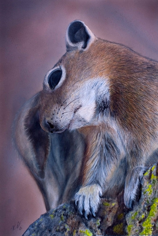 Golden-mantled Ground Squirrel Colored Pencil Drawing