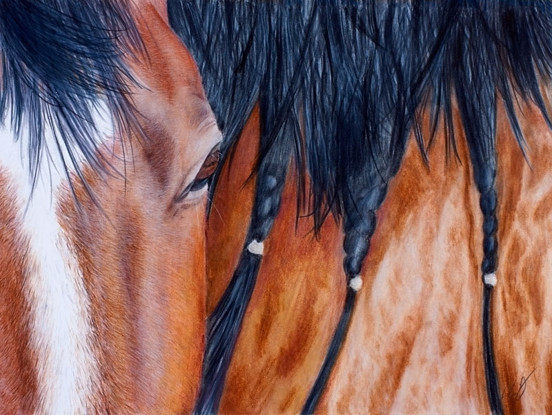 Horse Colored Pencil Drawing