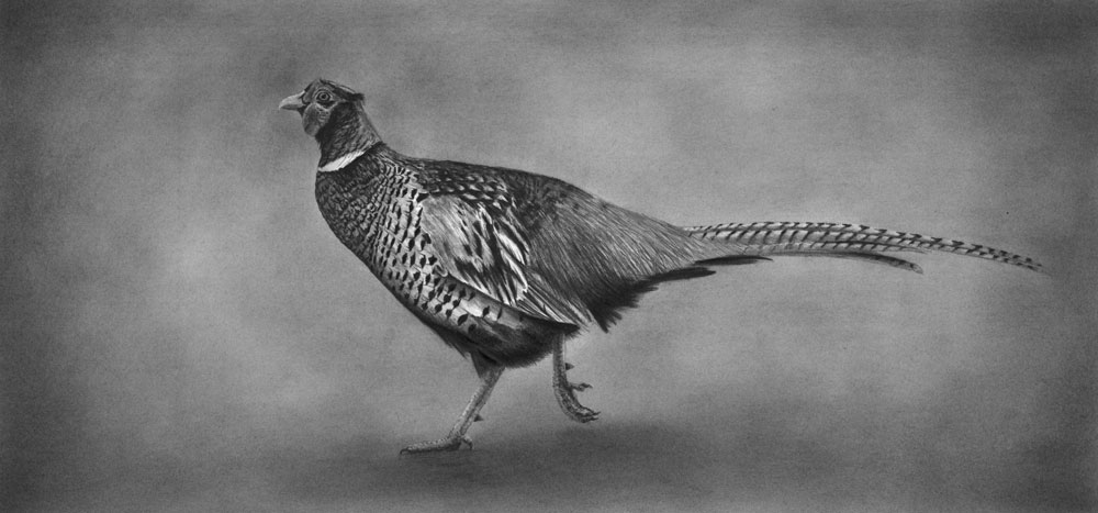 """On The Run"" Limited edition set of 150 Ringneck Pheasant Print 7.5""x16"""