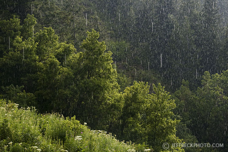 Sudden Downpour, City Creek Canyon, Utah