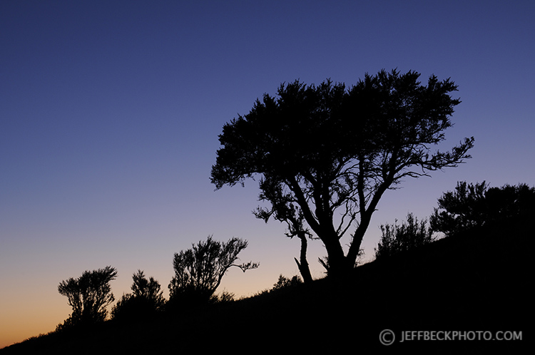 Russian Olive Silhouettes below Little Black Mountain, Utah