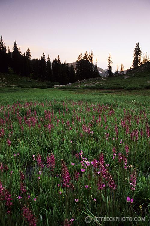 Alta Meadow