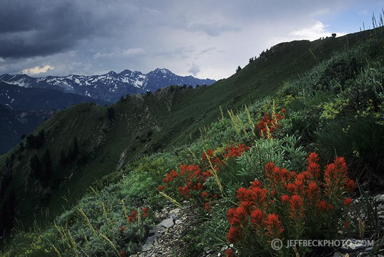 Gobbler's Knob Wildflowers