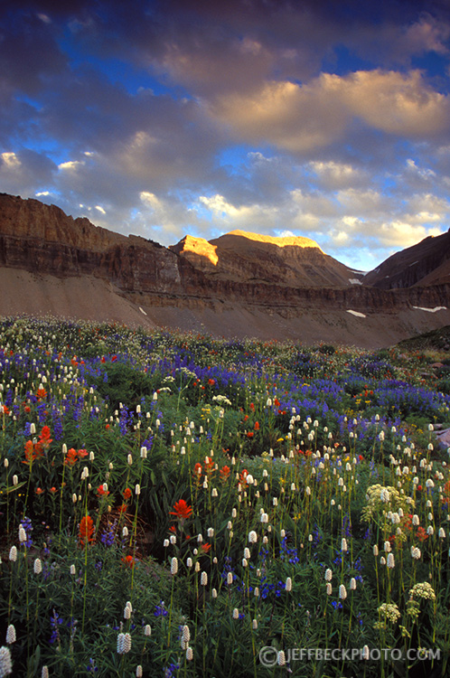 Wildflowers at Sunset