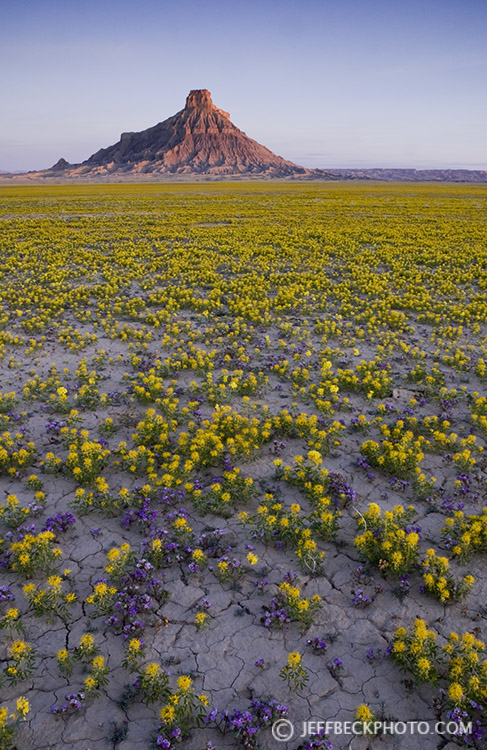 Bee Flower and Factory Butte