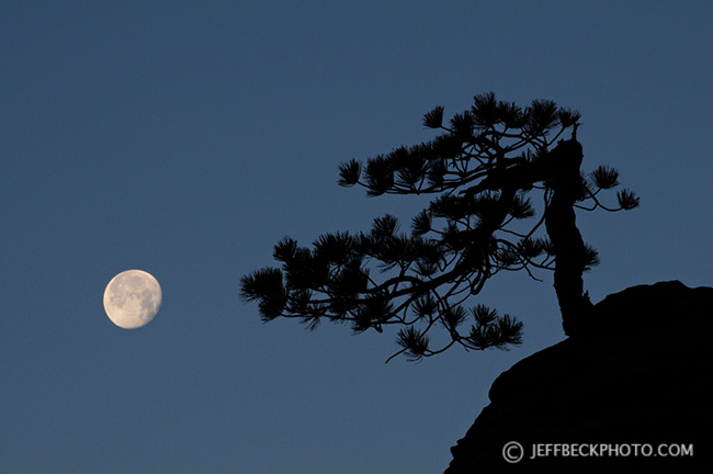 Twisted Pine and Moon