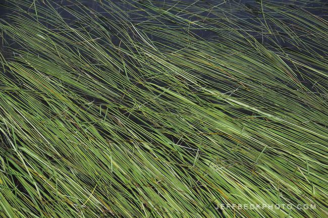 Life Aquatic, Lake Blanche, Twin Peaks Wilderness, Utah