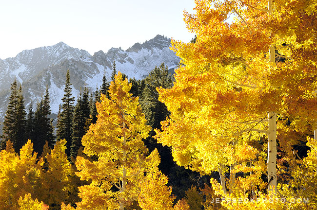 October Gold, Little Cottonwood Canyon, Utah