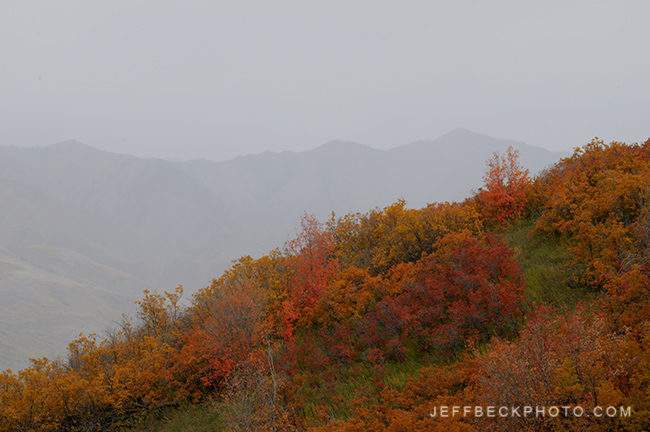 Autumn Evening Showers, Mountain Dell Canyon, Utah