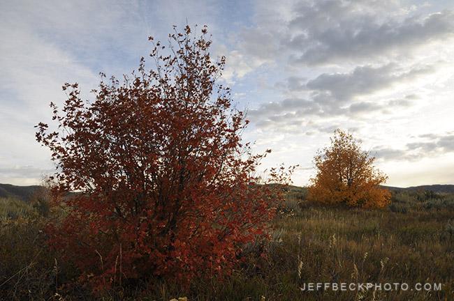 Morning Companions, Little Mountain, Utah