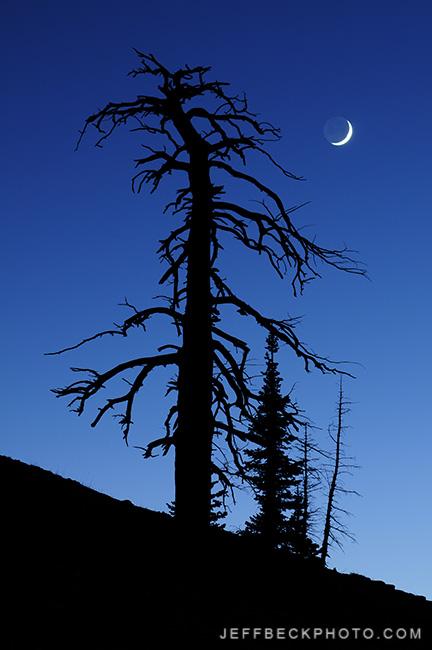 Tree Skeleton and Crescent Moon, Twin Peaks Wilderness, Utah