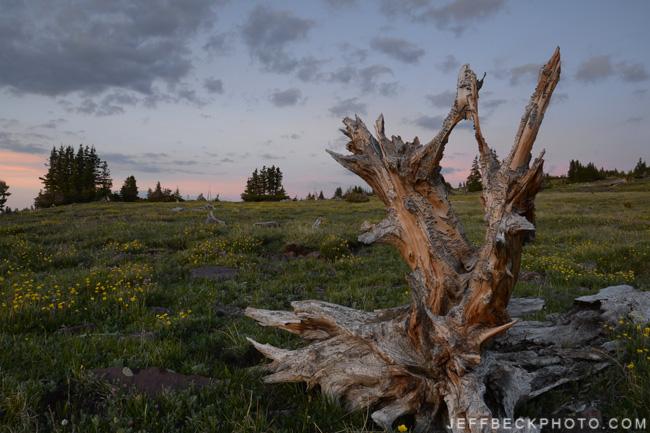 Last Stand, High Uintas Wilderness, Utah