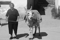 donkey+001.jpg