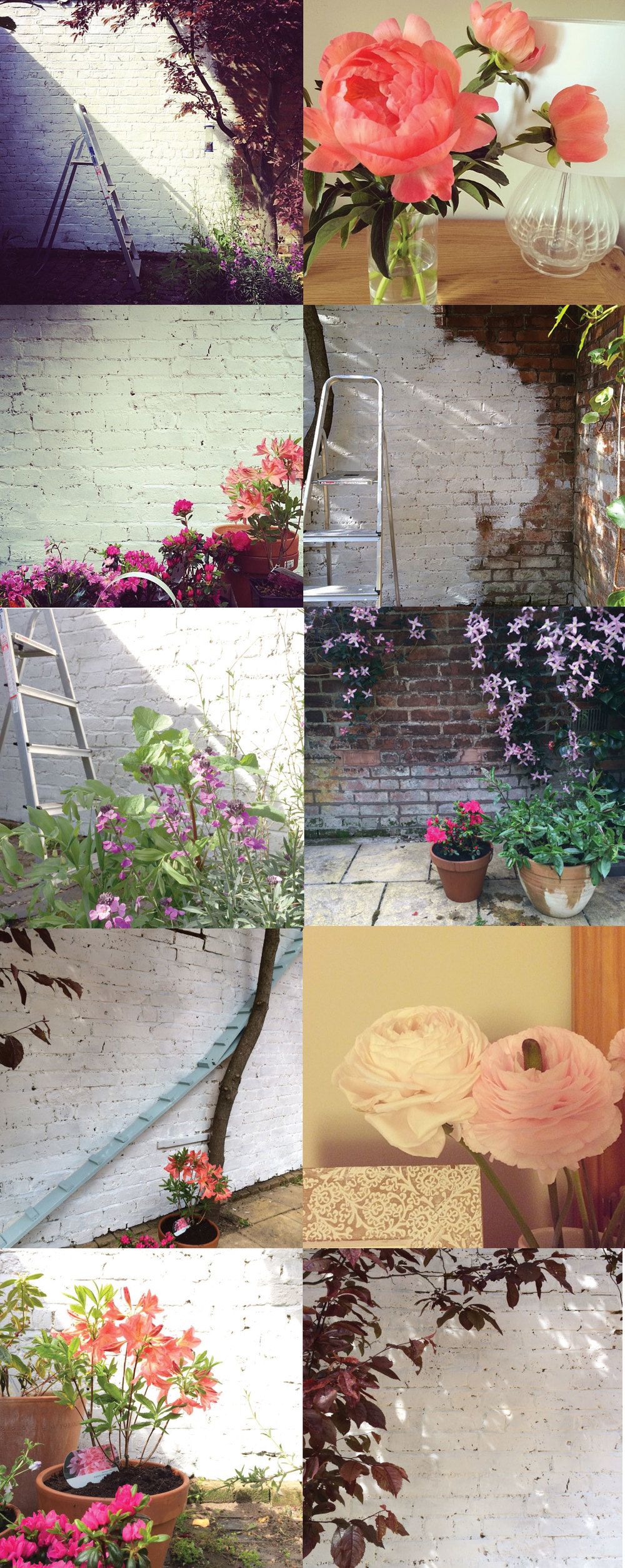 Some snaps from the garden and home this weekend.