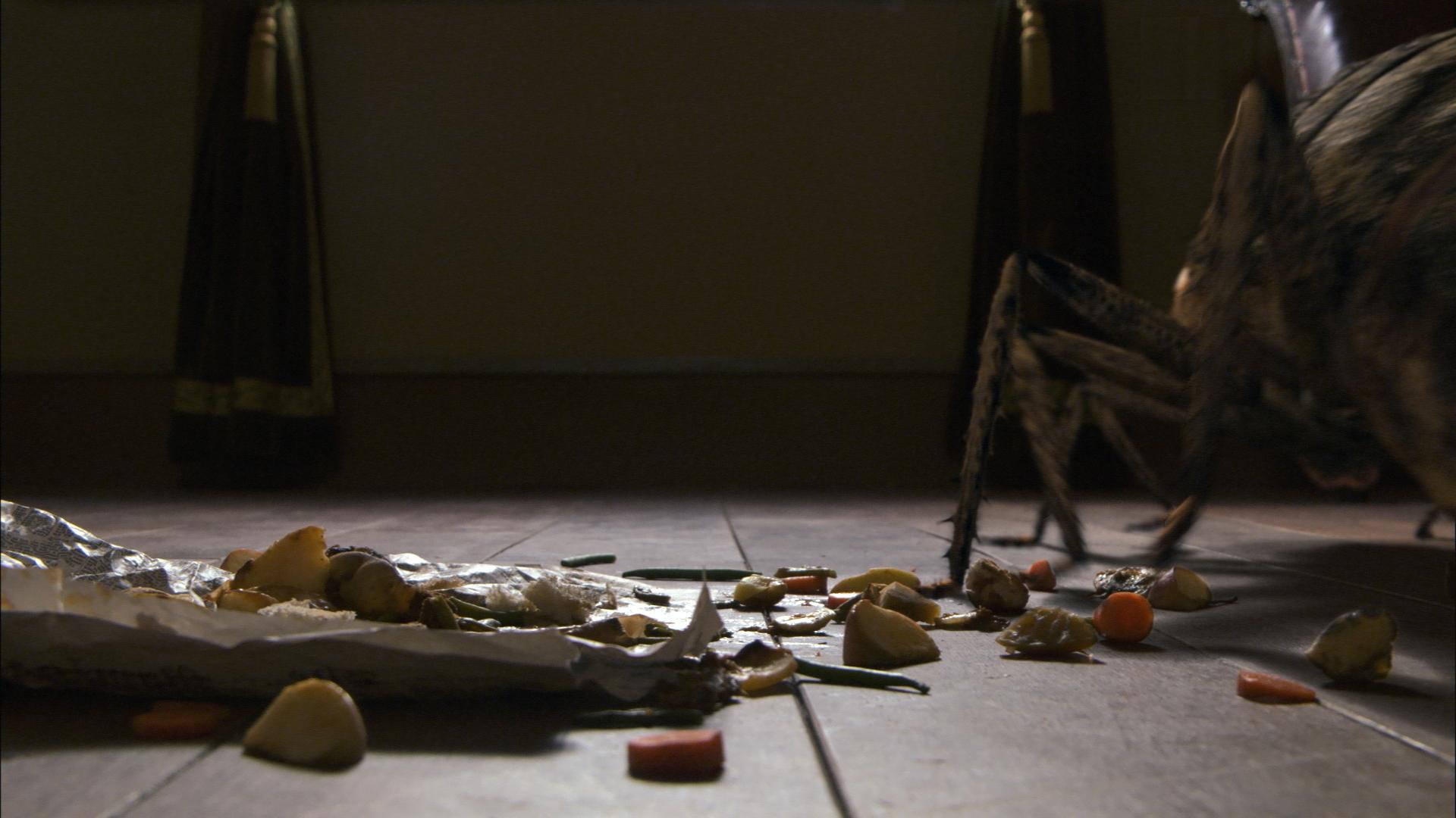 transformation in the metamorphosis by franz kafka Der komponist philip glass nimmt bezug mit seinen klavierwerken metamorphosis  die transformation in ein ungeziefer geschieht übergangslos  franz kafka: die.