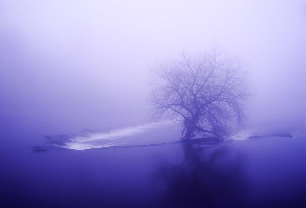 Tree on the Boyne