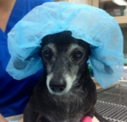 Lola in her surgical cap