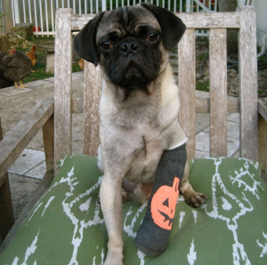 Slumdog's broken leg, circa 2010.