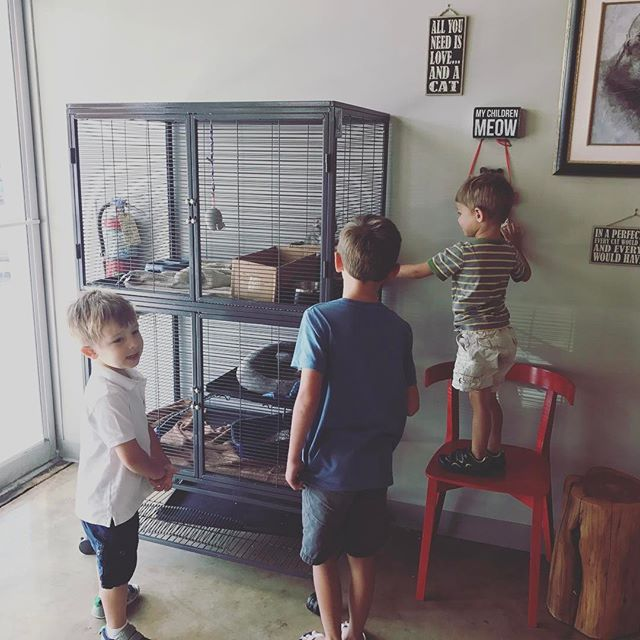 The #kitten habitat is a hit with the kids. The #kittens love it too. Helps socialize them & find their forever homes way faster. #vettech #fearfreevetvisit #kittensofinstagram #veterinarian #vetlife