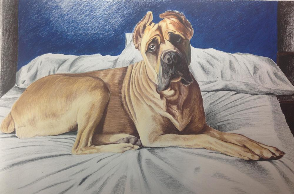 18 x 24 Prismacolor Pencil    For Samantha O'Brien-High Point, NC    Christmas 2013