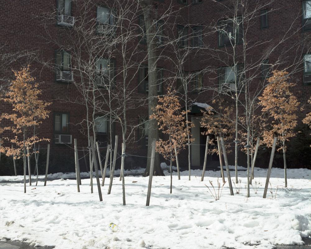StuyT Snow3.jpg