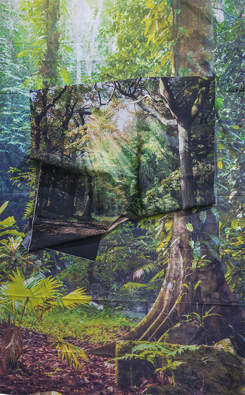 Sunrays in Rainforest, 2017