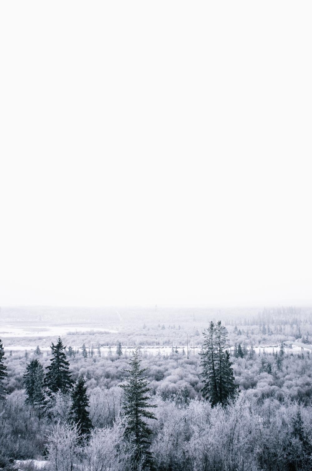 Weaselhead Flats. Calgary, Alberta, 2013.