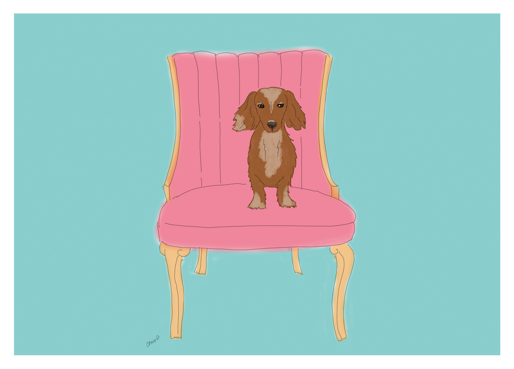 Dachshund on a chair