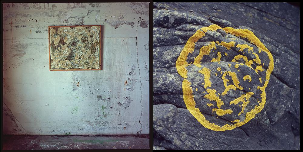 þriggja vetra 1# / graðaloftið / 120mm / h.pálmason. 2014