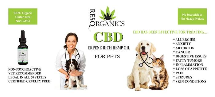 CBD-Hemp-Oil-for-Pets.jpg