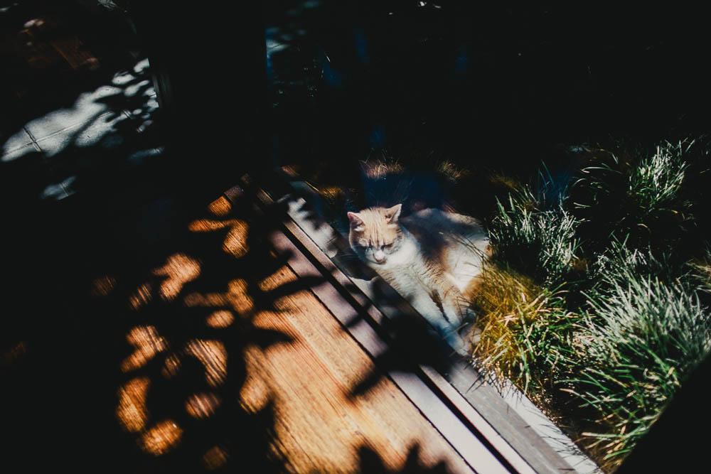 Melbourne Wedding Photographer32.jpg