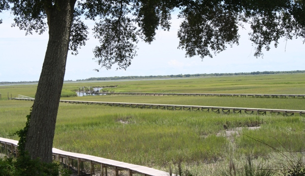 Charleston marsh view