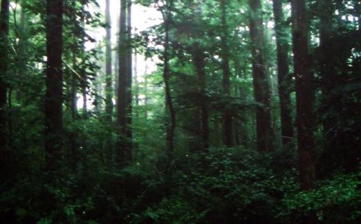 roosevelt_woods-522x720.jpg