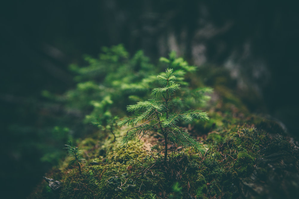 The pace of nature -