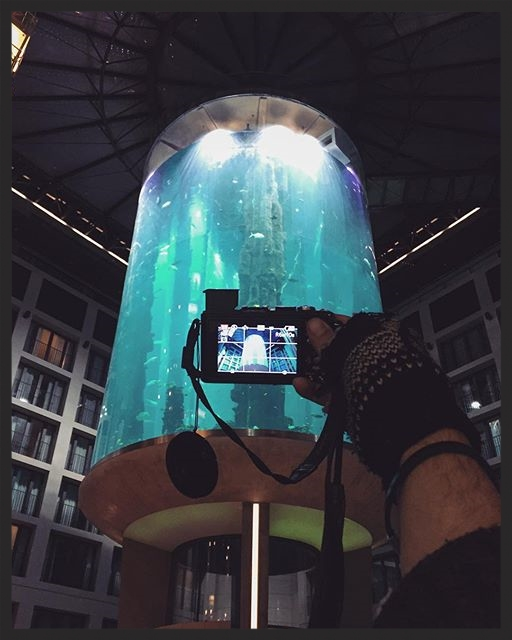 The aquarium was completed in 2004, it's 25 meters tall, it's filled with 1,000,000 liters of water and it contains over 1,500 fish of 50 different species. Every day a bunch of divers jump into that for the feeding of the fish and the cleaning of the tank.
