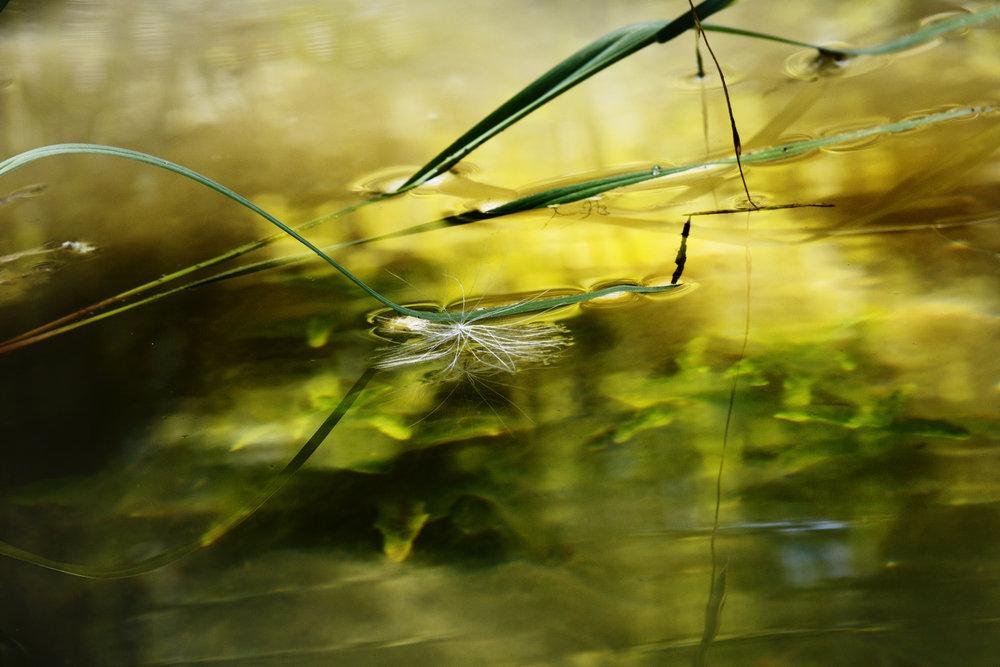 Milkweed Landing