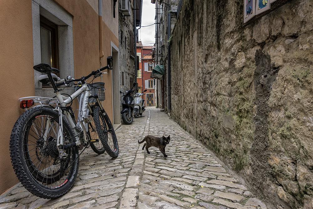 Street #2.jpg