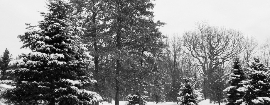 cropped-refined-trees-bw.jpg