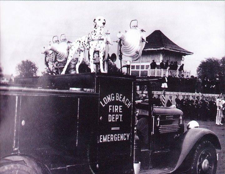 Fire Dept Emergency Dog.jpg