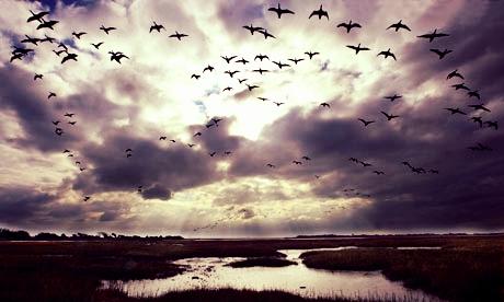 Migrating-birds-001.jpg